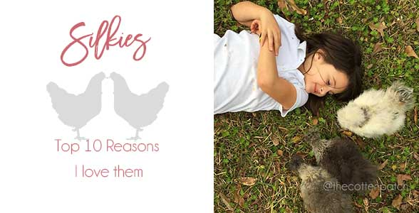 10-reasons-i-love-silkies